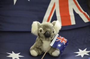 australian flag koala bear